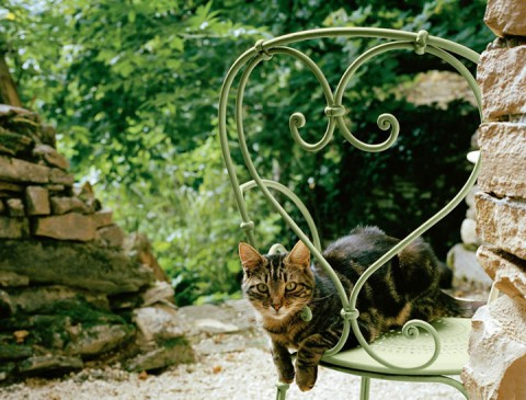 1900 chair in Willow Green (avec chat)