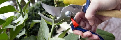 Opinel secateurs