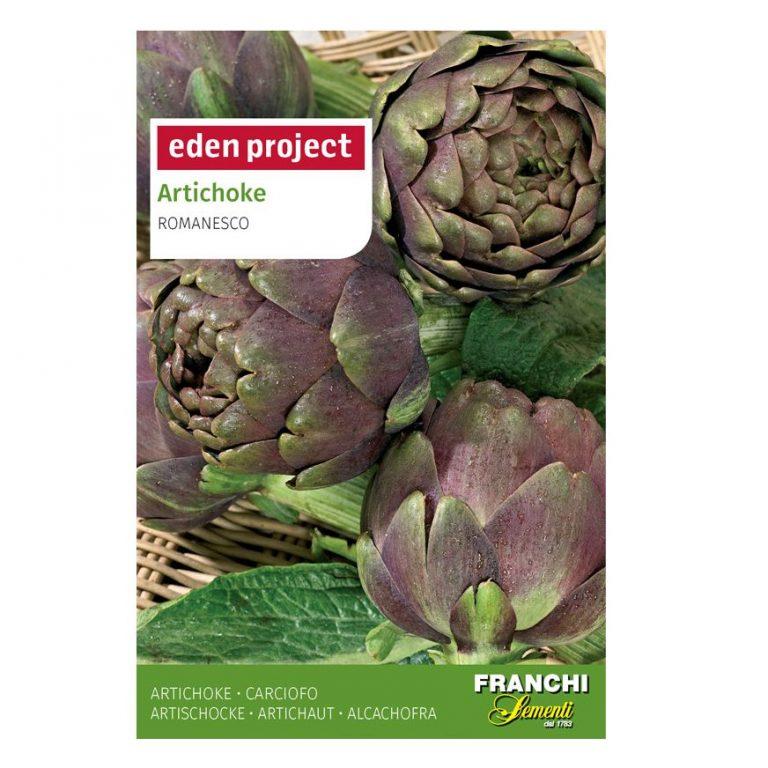Artichoke 'Violet de Provence'