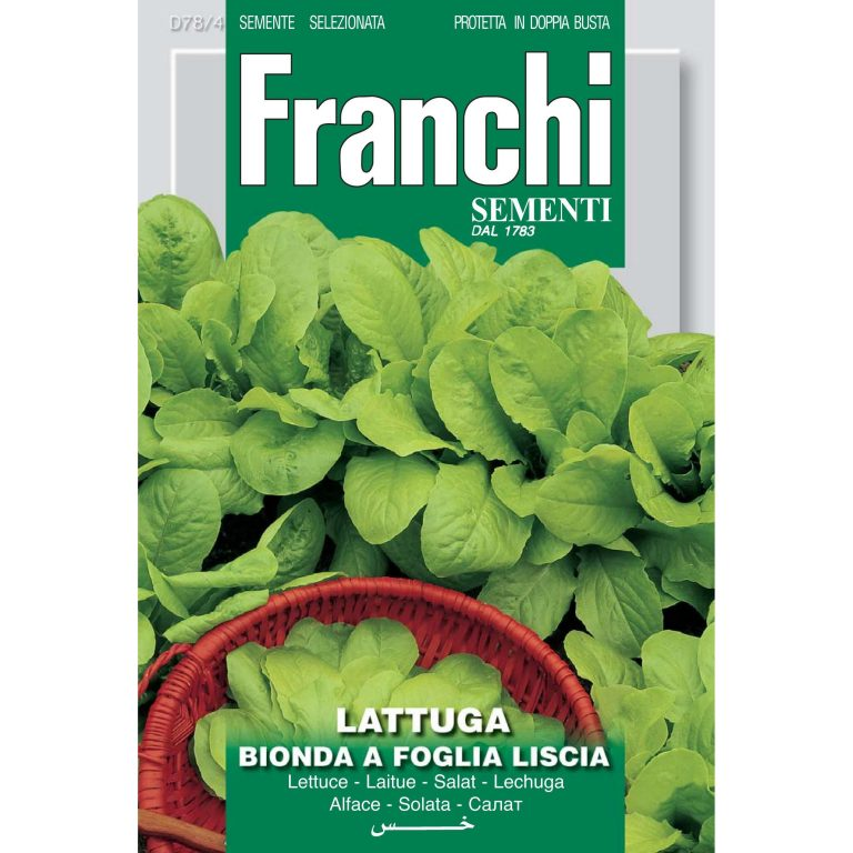 Lettuce Bionda a Foglia Liscia