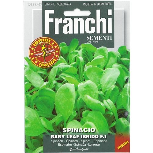 Spinach baby leaf