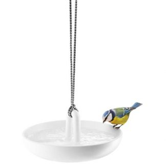 Bird bath with blue tit