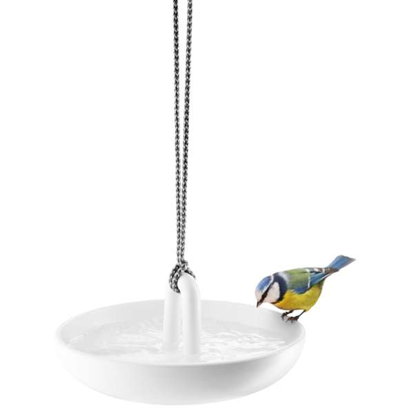 Bird bath with blue tit