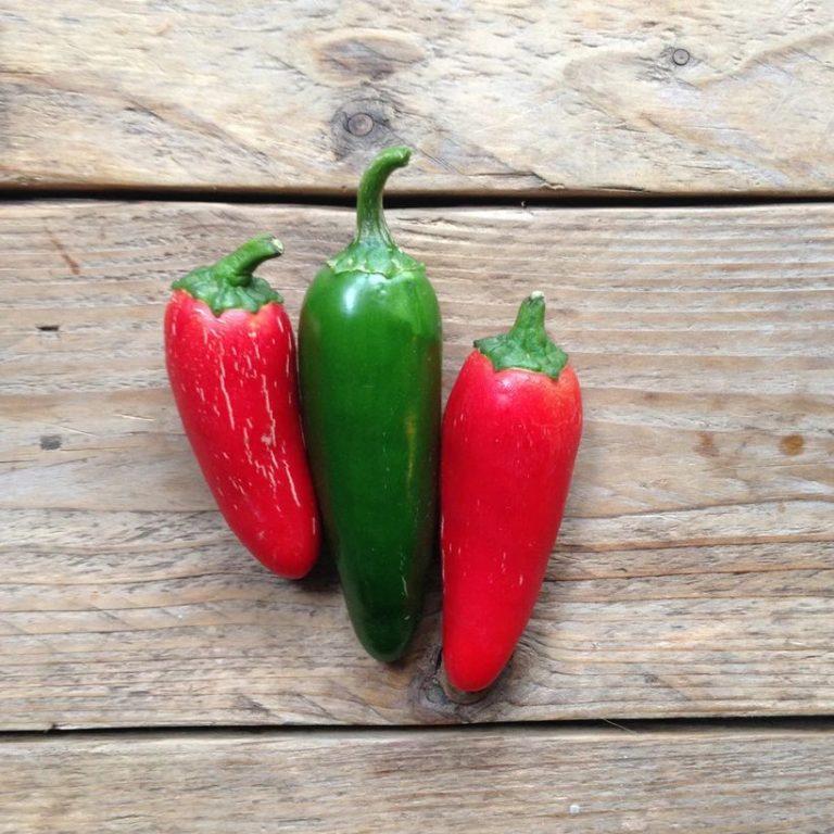 Hot Pepper 'Jalepeño M'